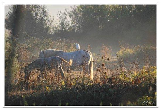 Les Marais du Vigueirat: Les chevaux et héron