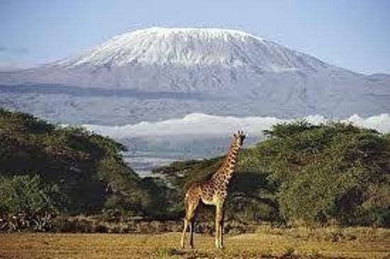 Amboseli National Park : beautiful game(giraffe)
