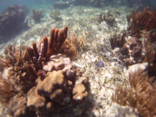 Parque Nacional Arrecife Puerto Morelos - Puerto Morelos Reef : Amazing coral formations