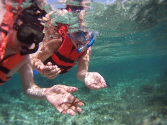 Parque Nacional Arrecife Puerto Morelos - Puerto Morelos Reef : Tiny star fish