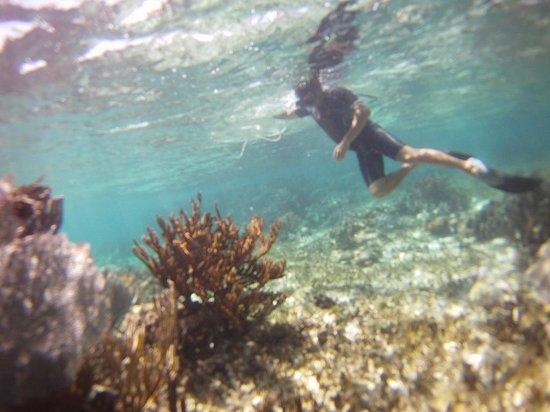 Parque Nacional Arrecife Puerto Morelos - Puerto Morelos Reef : Our guide