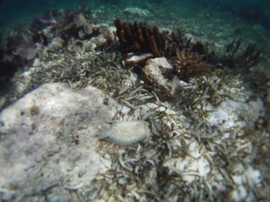 Parque Nacional Arrecife Puerto Morelos - Puerto Morelos Reef : Camouflaged lemon sole