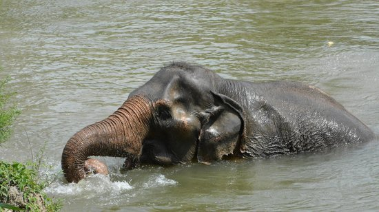 Asian elephant - Foto di Wildlife Friends of Thailand, Tha ...