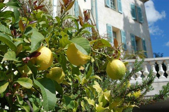 Hotel La Bellaudiere : Pianta di limoni in giardino