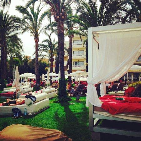 Vanity Hotel Golf: Garden