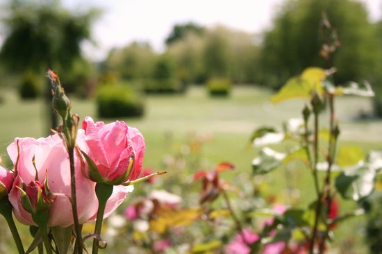 Hotel Certaldo's garden - Il giardino dell'Hotel Certaldo