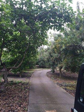 Ohana Farm Orchards