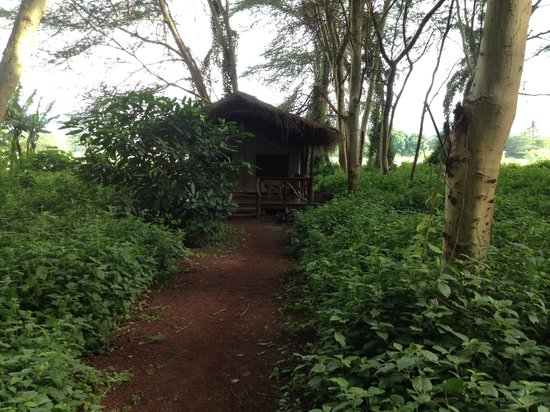 Migunga Tented Camp: Bungalou