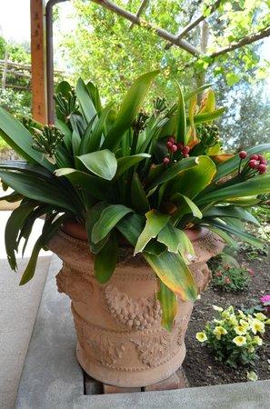 Rifugio degli Dei: Plants on terrace