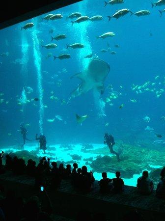 Georgia Aquarium : Divers narrating in the big tank