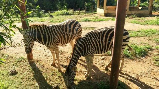 Parque Zoobotanico Do Salvador Da Bahia