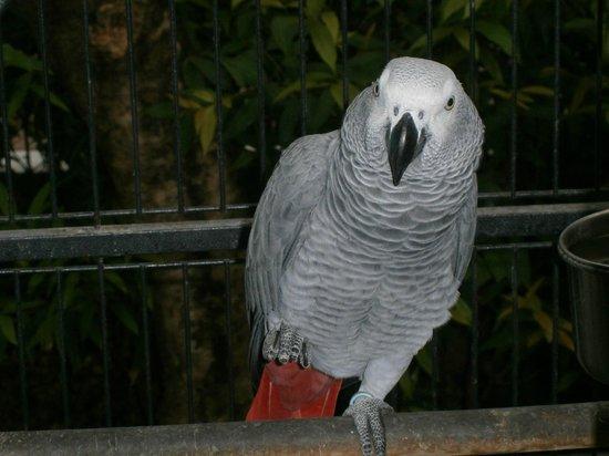 Burasari Resort: Polly