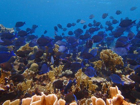 Savaneta, Aruba: fish schools
