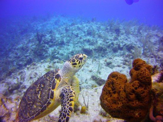 Club Med Columbus Isle : Turtle