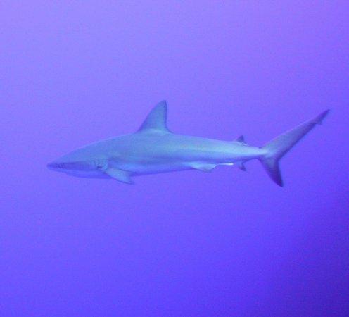Club Med Columbus Isle : shark