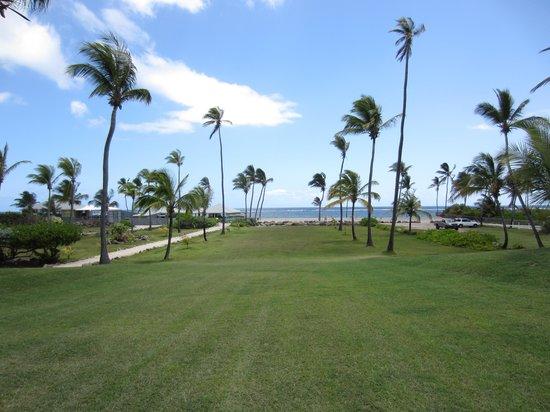Nisbet Plantation Beach Club : Avenue of Palms