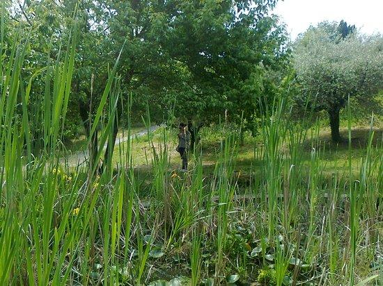 Giardino Dell'Iris: Immersi nel verde