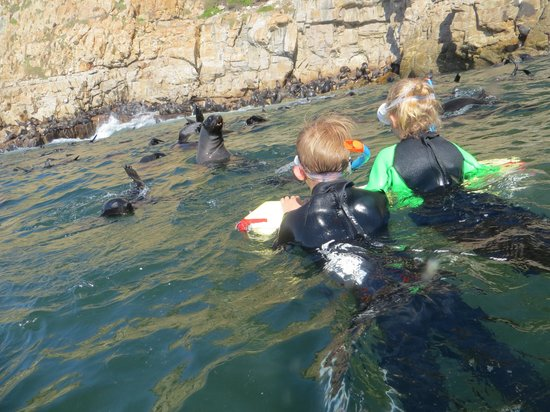 Offshore Adventures: kids looking at seal