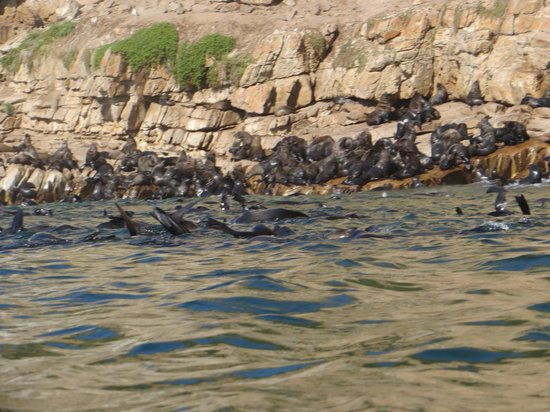Offshore Adventures: many seals