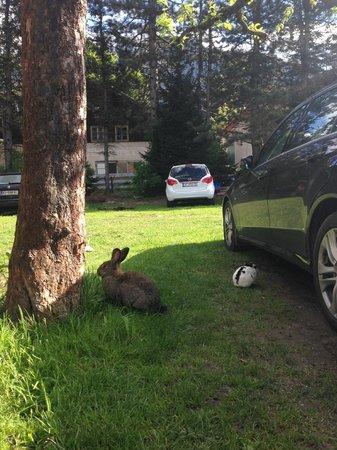 Hotel Garni Obermair: сад и кролики