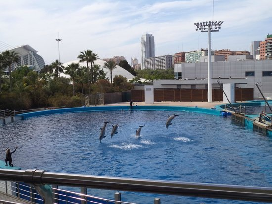 Oceanogràfic: Dolphin show (no additional fee!)