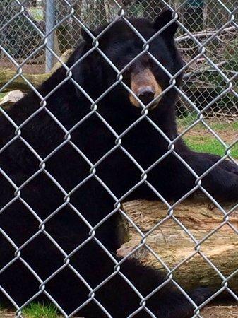 Oaklawn Farm Zoo: Blueberry the Black Bear
