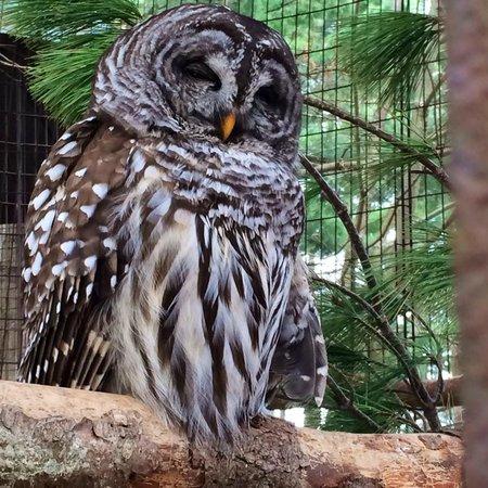 Oaklawn Farm Zoo: Barred Owl