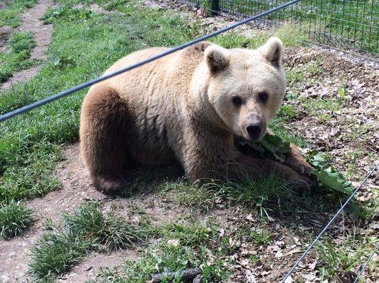 Libearty Bear Sanctuary Zarnesti : La bionda!