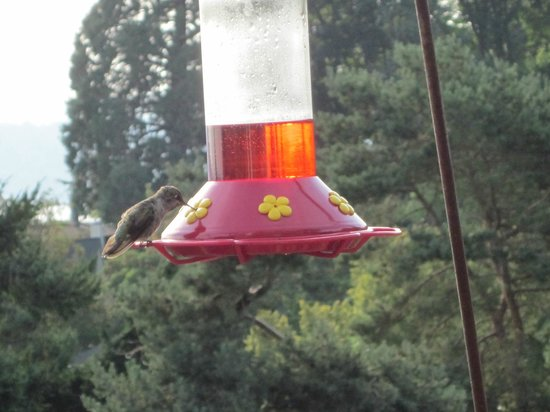 Mazama Country Inn: Hummingbirds Love it here!