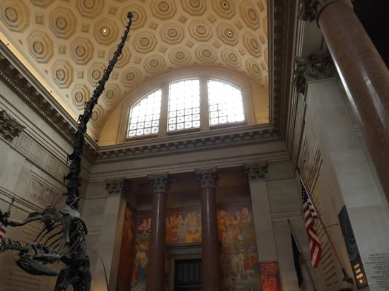 American Museum of Natural History : ny