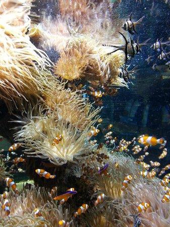 Oceanographic Museum of Monaco: Невероятно красиво!