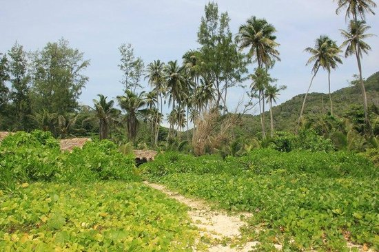 Grand Anse: Тропинка от кафе