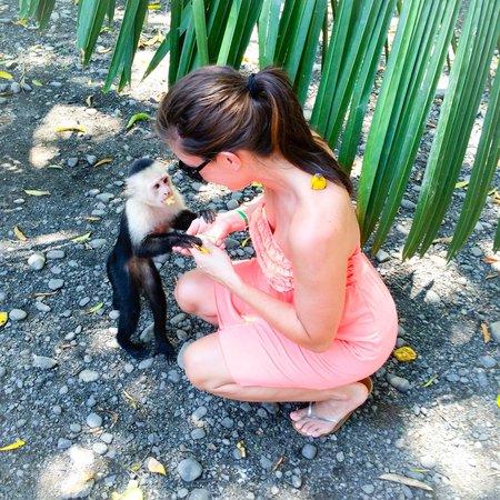 Tiquicia Tours: Feeding monkeys