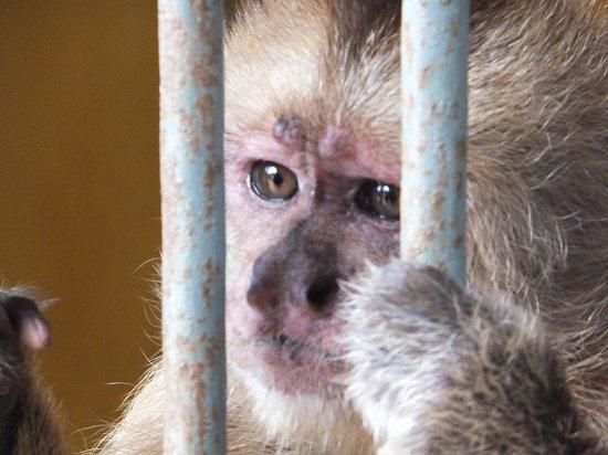 Philip's Animal Garden: Cute monkey - sad story
