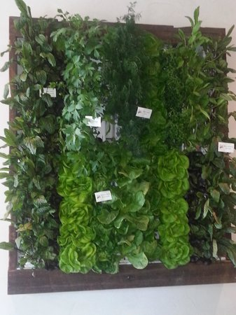 Epicurean Hotel, Autograph Collection: herbs on lobby wall