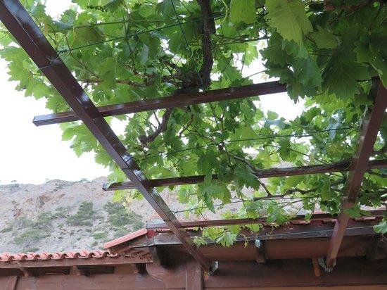 Ilias Rooms: Widok z tarasu na góry