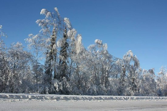 Northern Alaska Tour Company: Snow covered trees