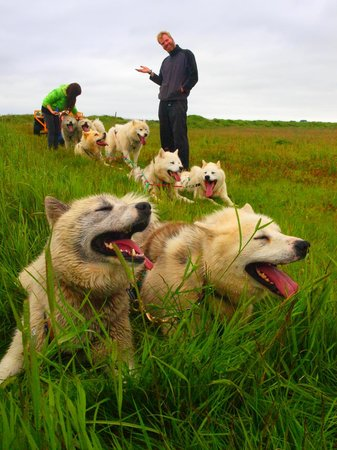 Dog Sledding Iceland Reviews