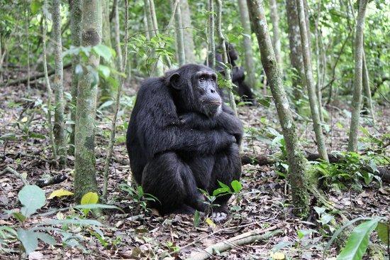 Kibale National Park: Contemplating