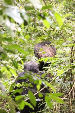 Kibale National Park: Follow the leader