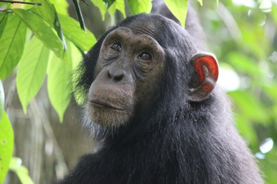 Kibale National Park: Up close