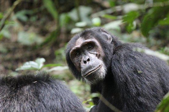 Kibale National Park: Staredown