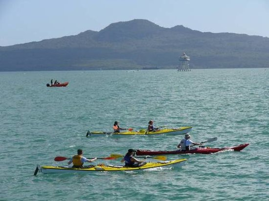 Fergs Kayaks Auckland: Guided Rangitoto Tour