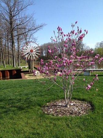 Windmill Island Gardens: magnolia tree