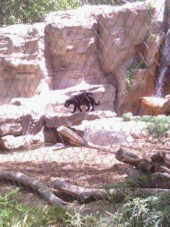 Reid Park Zoo : Jaguar