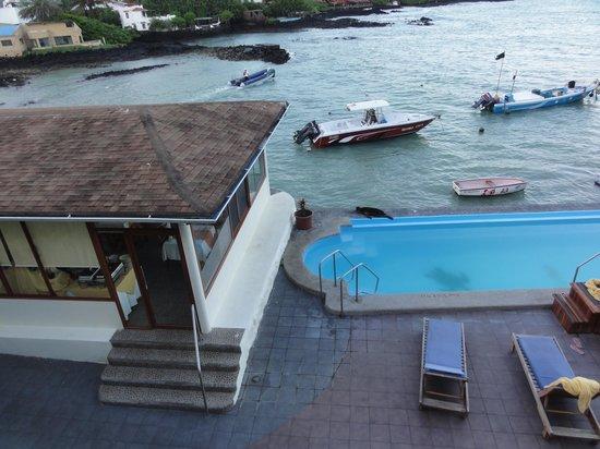 Hotel Solymar: sea lion visit on hotel pool
