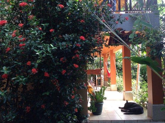 Atenas Adventure Hostel: Entrance