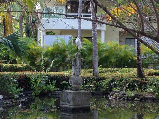 Paradisus Punta Cana : Bird life