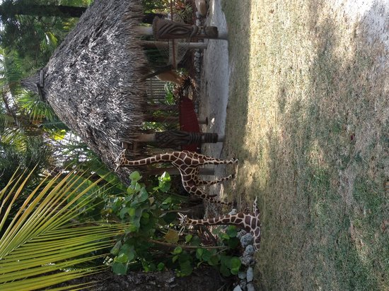 Sunset Cove Beach Resort : Tiki with hammocks