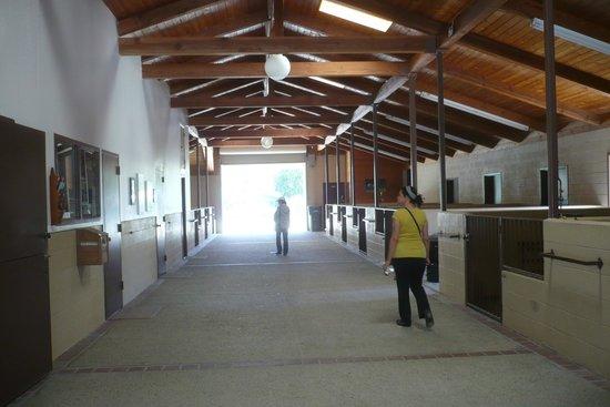 Quicksilver Ranch : Very Clean Modern Barn